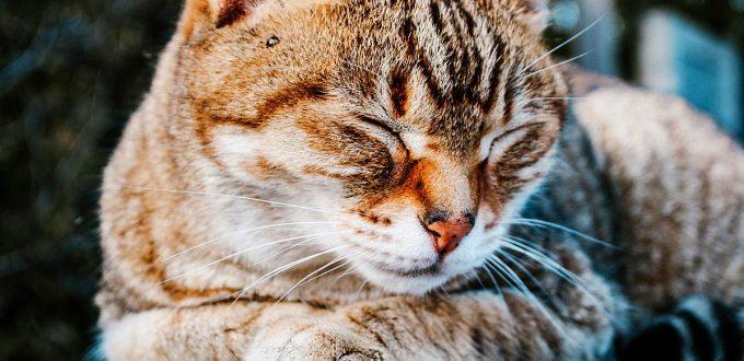 Vorwärtsbeuge entspannt bei Stress besonders gut